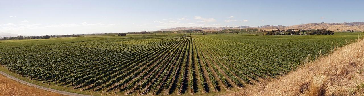 Marlborough and Kaikoura Coast Regional Weather Group - winegrowing-2151457_1920 | New Zealand Weather Network image